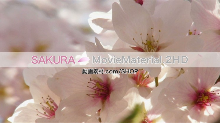 SAKURA MovieMaterial.2HD ハイビジョン桜舞うCG動画素材と桜実写映像素材集2