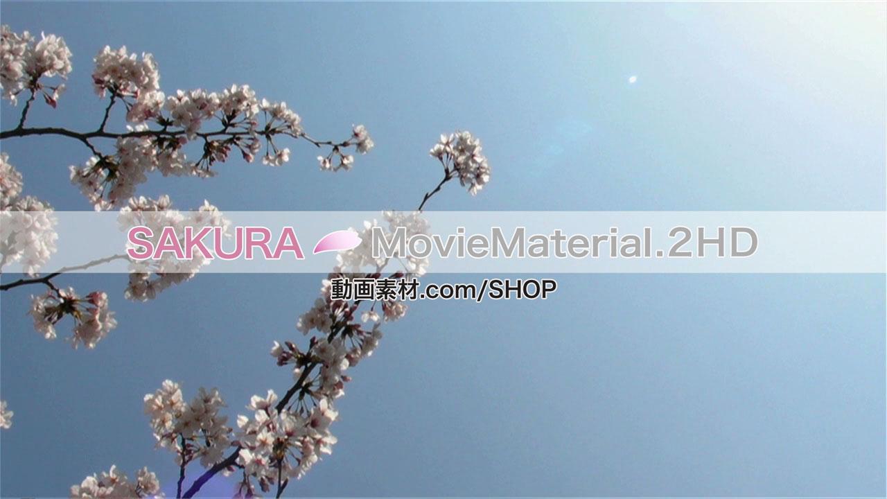 SAKURA2HD_005