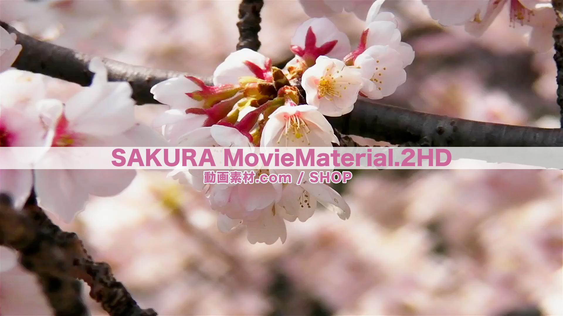 SAKURA2HD_1
