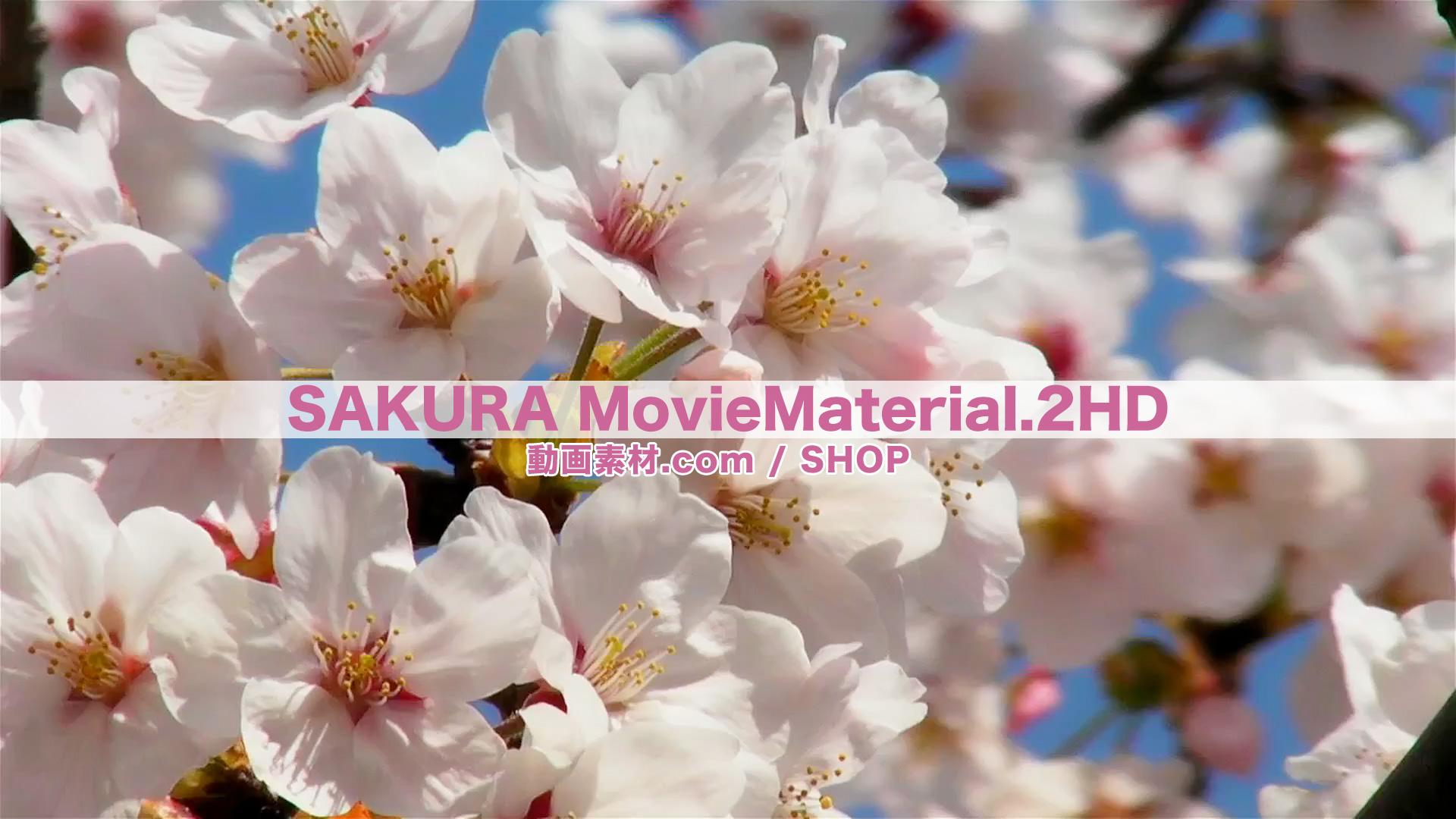 SAKURA2HD_2