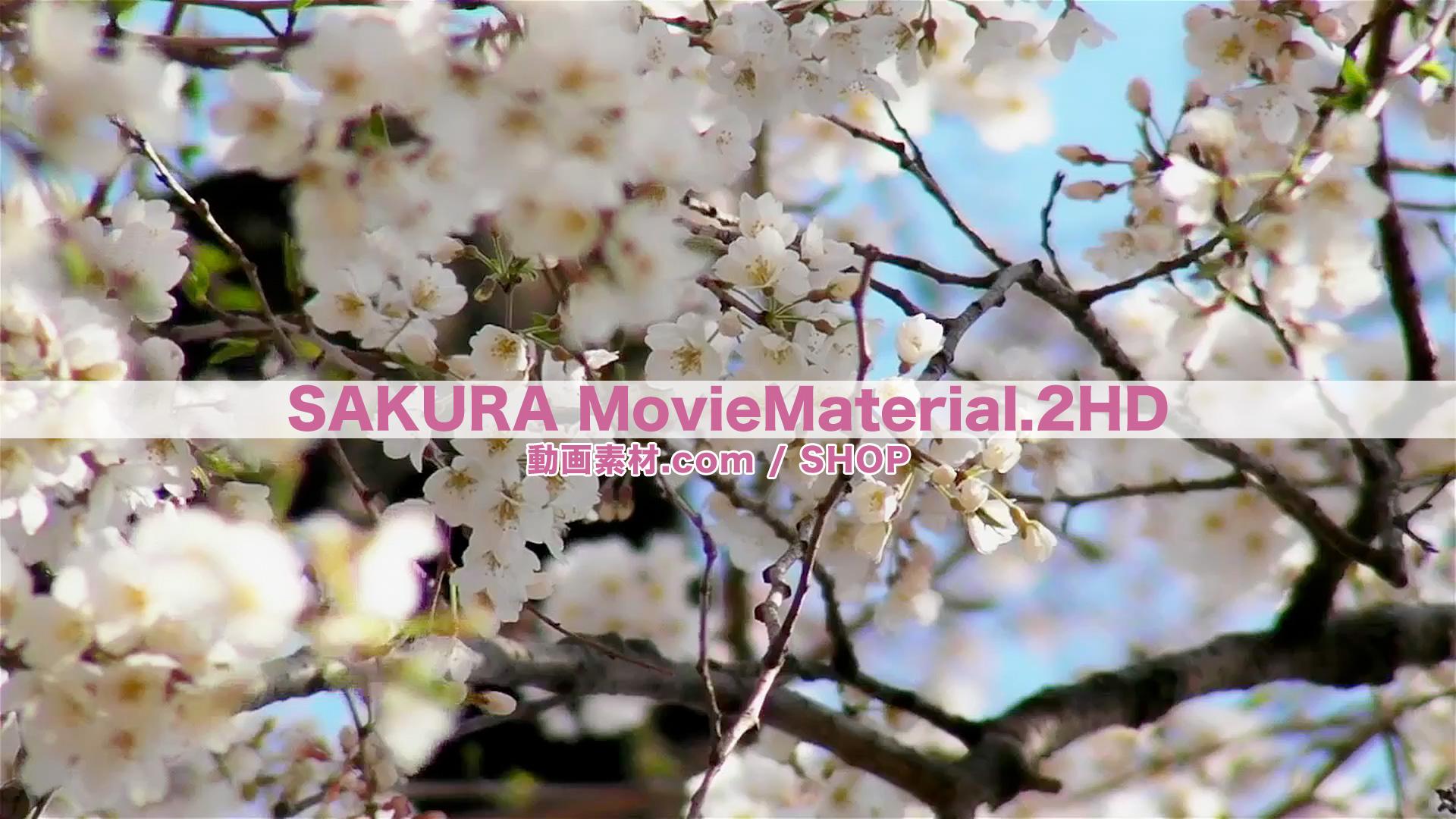 SAKURA2HD_4