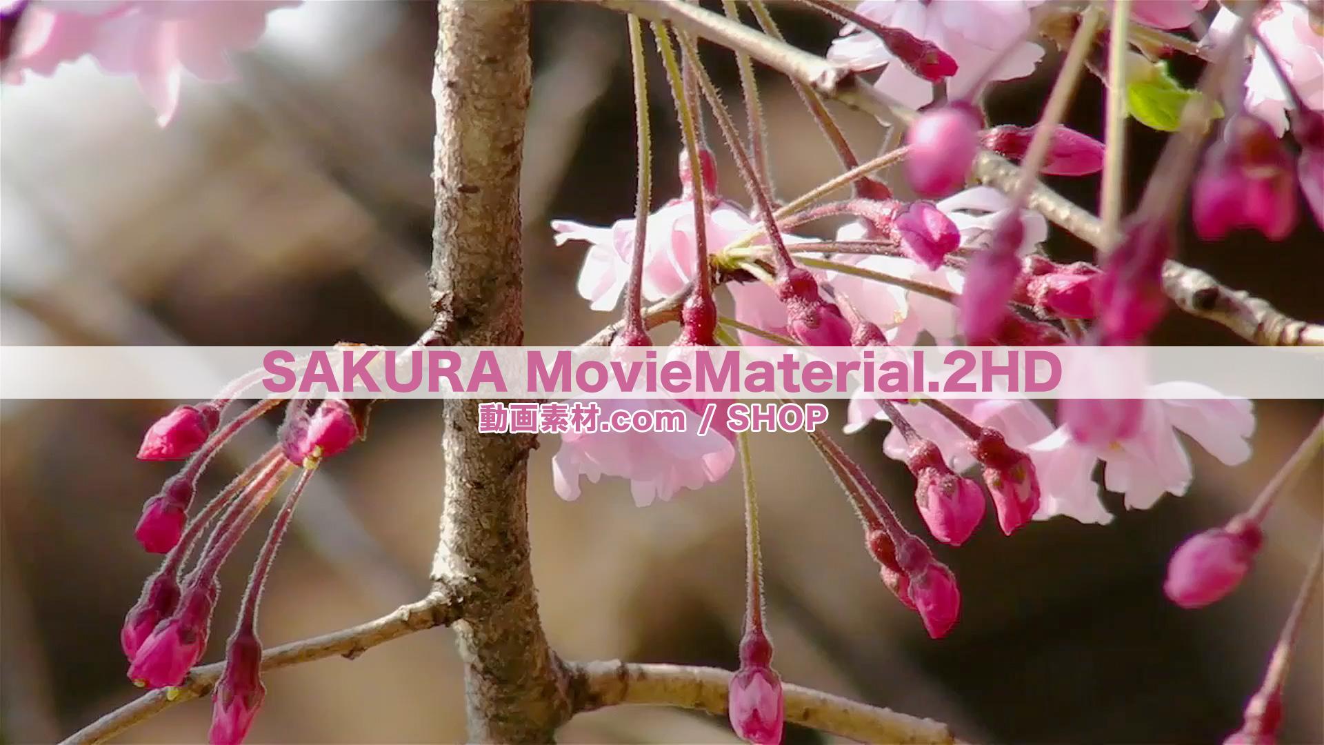 SAKURA2HD_5