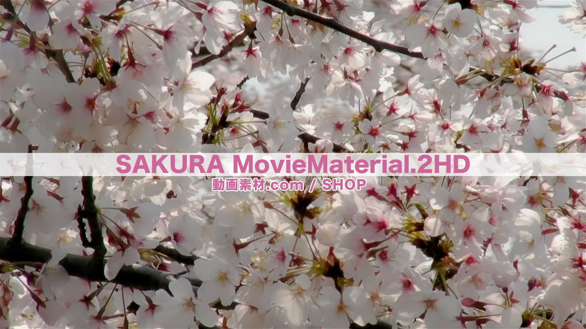 SAKURA2HD_6