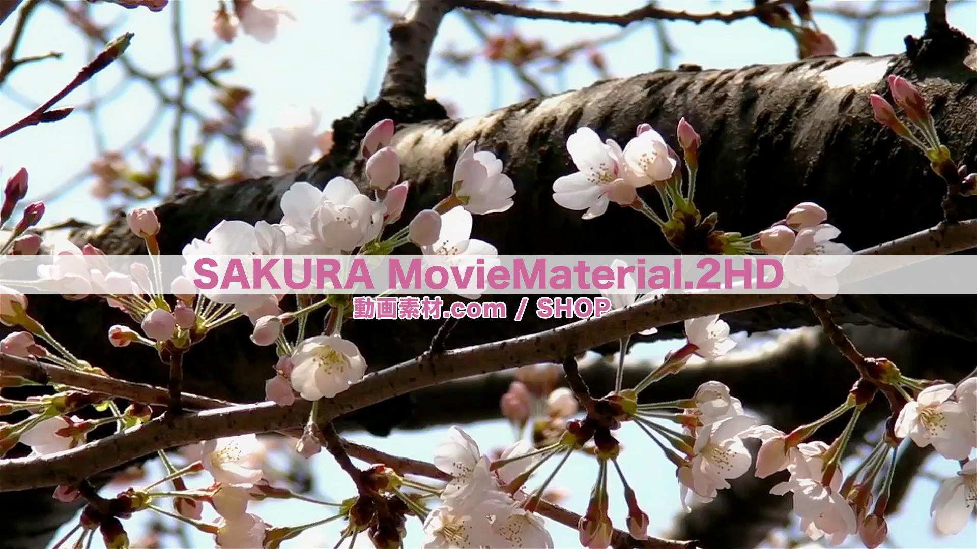 SAKURA2HD_7