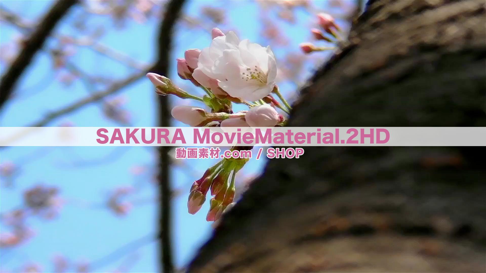 SAKURA2HD_8