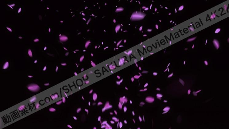 SAKURA MovieMaterial 4K2K 桜の花びら舞う動画素材3840×2160 ロイヤリティフリー1