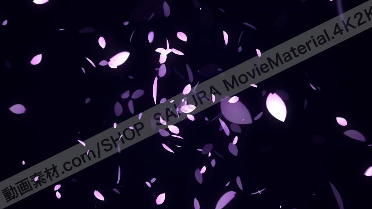 SAKURA MovieMaterial 4K2K 桜の花びら舞う動画素材3840×2160 ロイヤリティフリー2