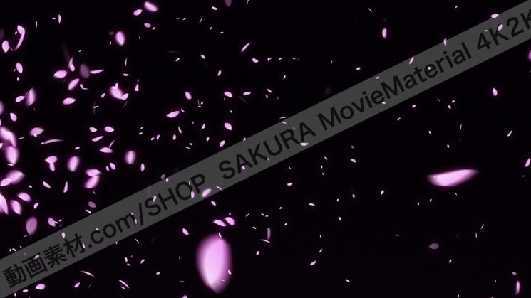 SAKURA MovieMaterial 4K2K 桜の花びら舞う動画素材3840×2160 ロイヤリティフリー3