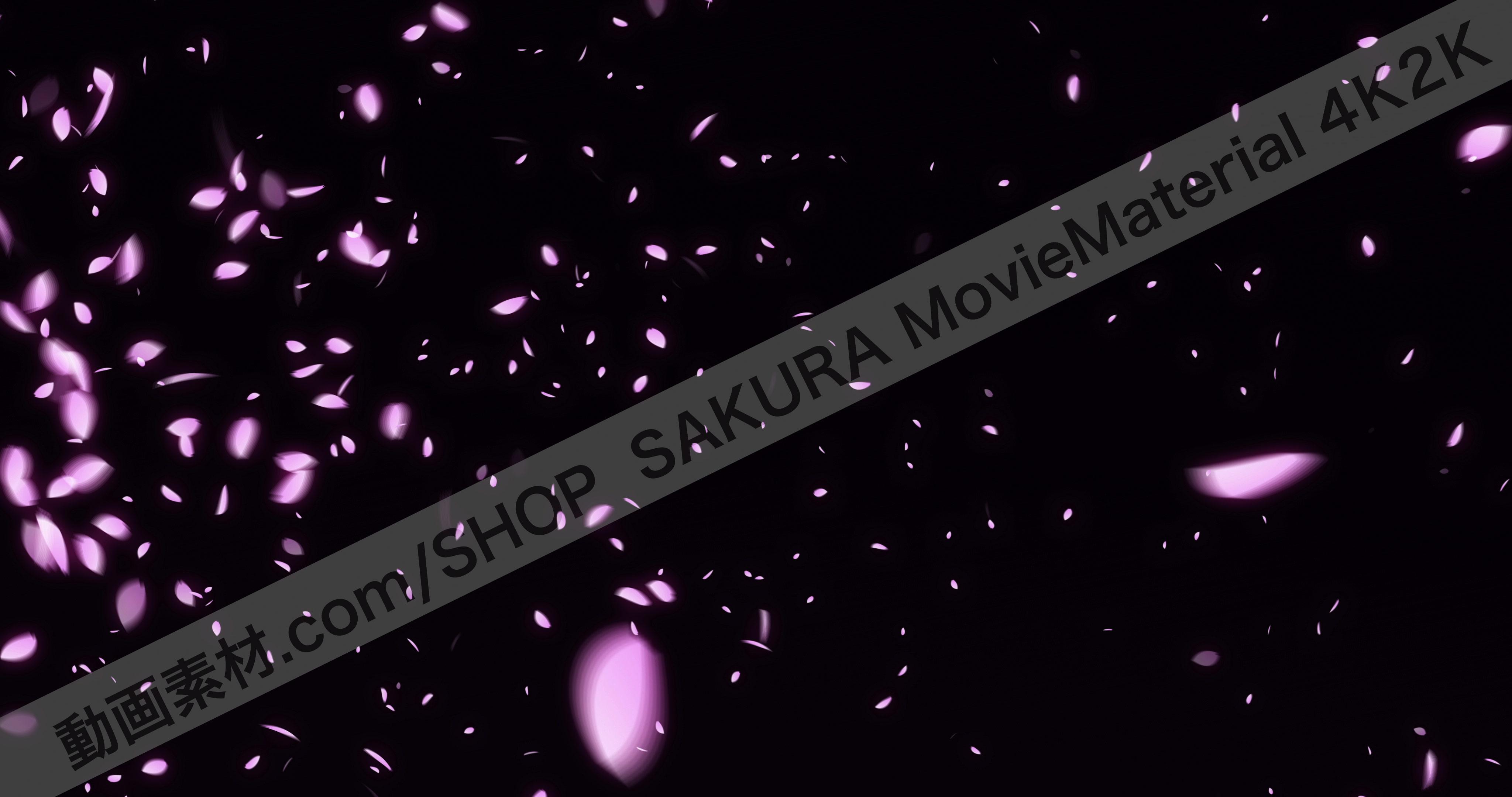 SAKURA4K2K_3
