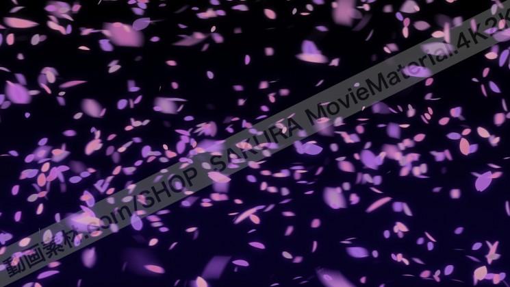 SAKURA MovieMaterial 4K2K 桜の花びら舞う動画素材3840×2160 ロイヤリティフリー4