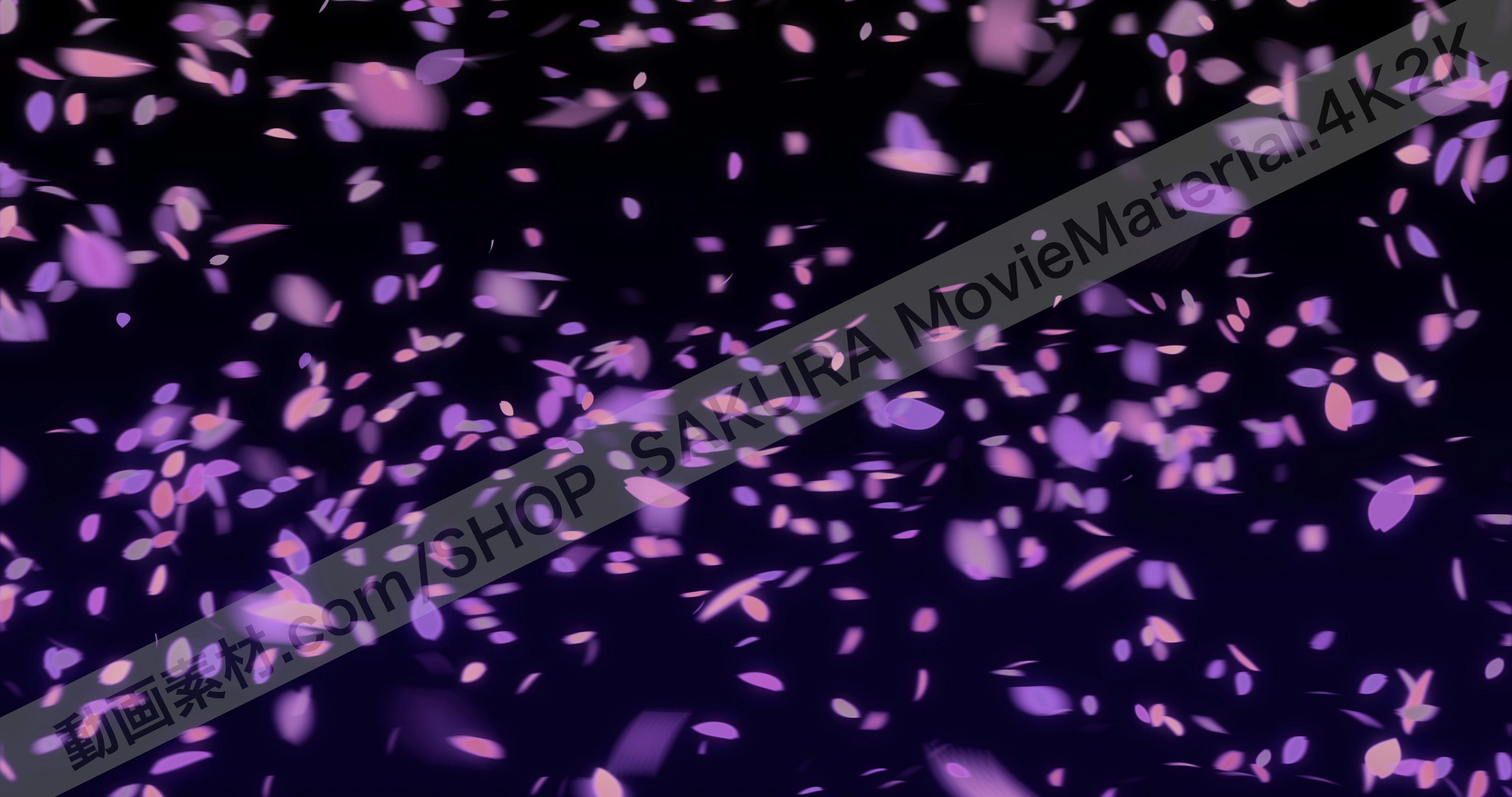桜の花びら舞う動画素材4098×2160と3840×2160【SAKURA MovieMaterial 4K2K】