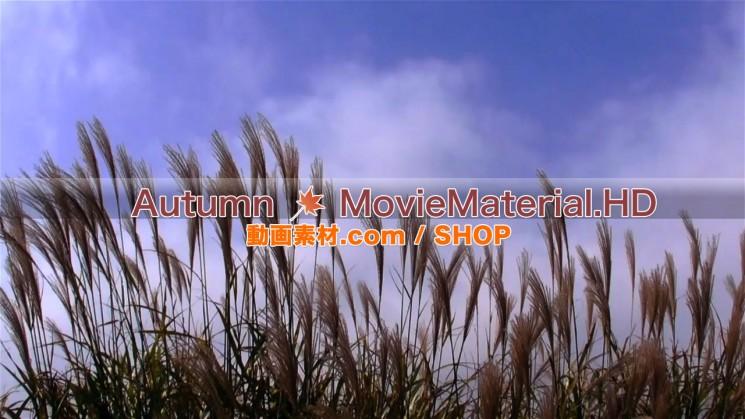 秋を題材にした実写映像素材とCG動画素材【Autumn MovieMaterial】6