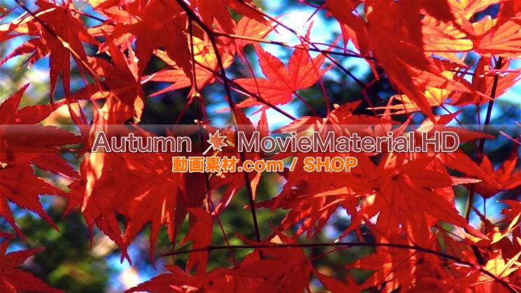 秋を題材にした実写映像素材とCG動画素材【Autumn MovieMaterial】5