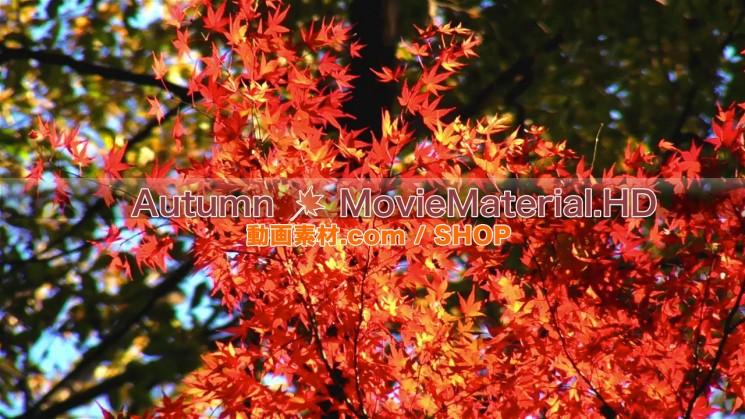 秋を題材にした実写映像素材とCG動画素材【Autumn MovieMaterial】4