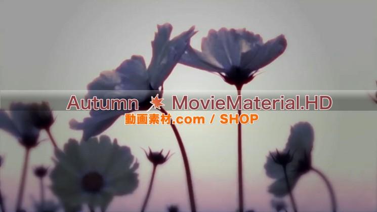 秋を題材にした実写映像素材とCG動画素材【Autumn MovieMaterial】1