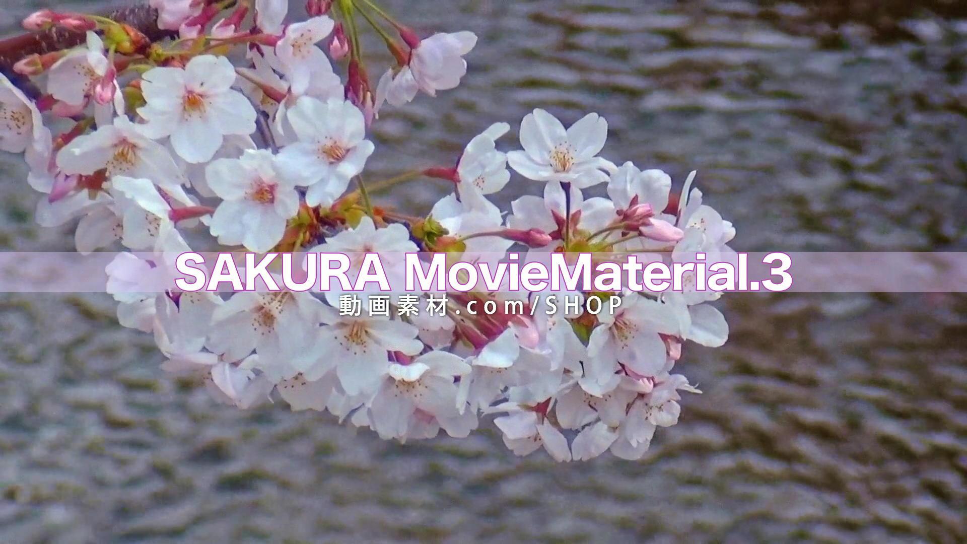 SAKURA3_10