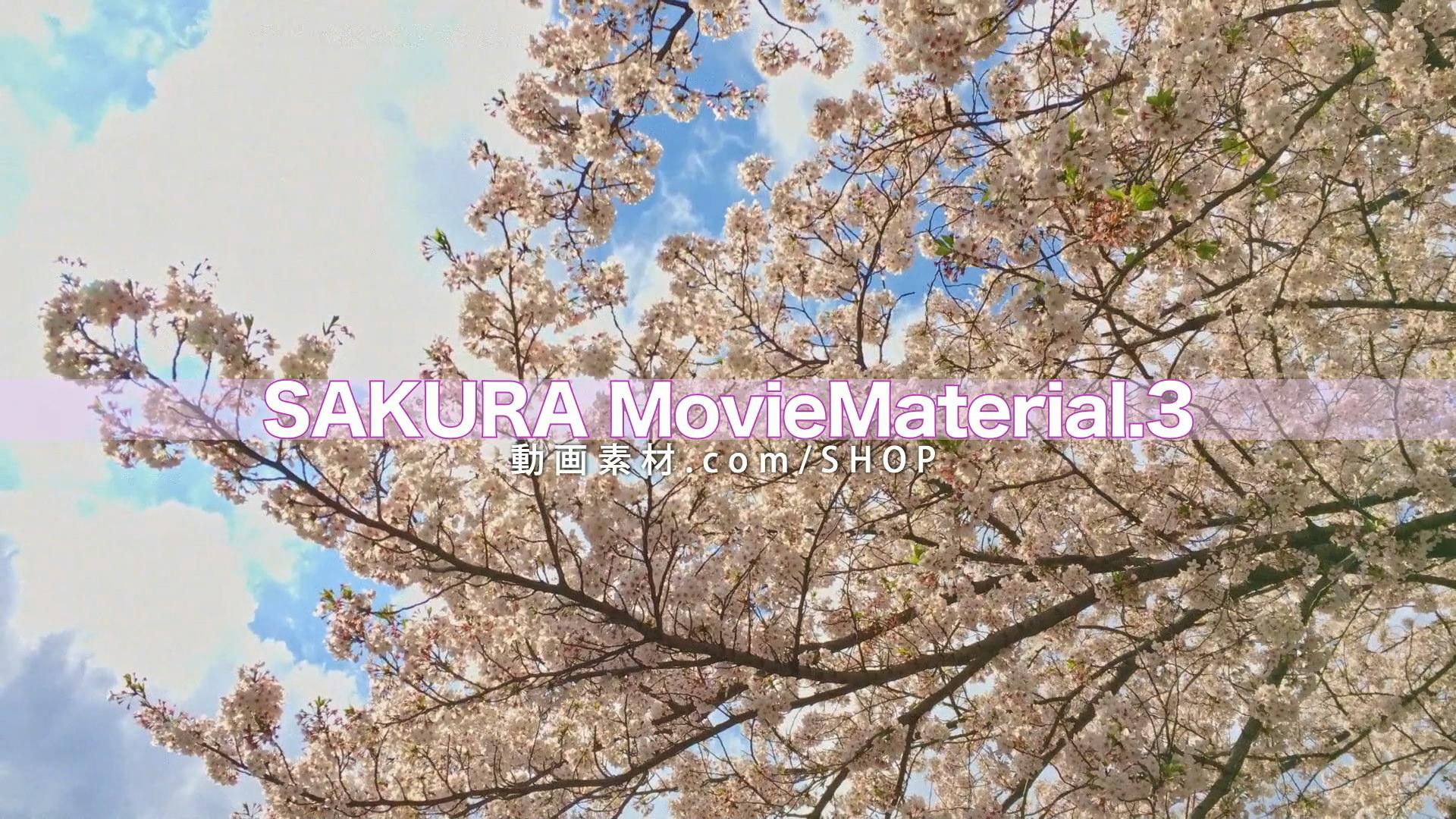 SAKURA3_15