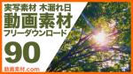 実写素材 木漏れ日【フリー動画素材10本追加】