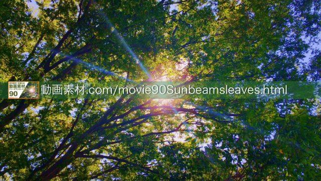 sunbeamsleaves01