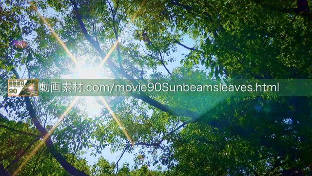 sunbeamsleaves02