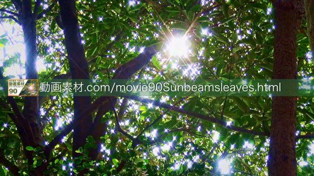 sunbeamsleaves03