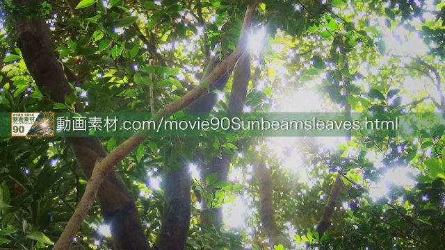 sunbeamsleaves04