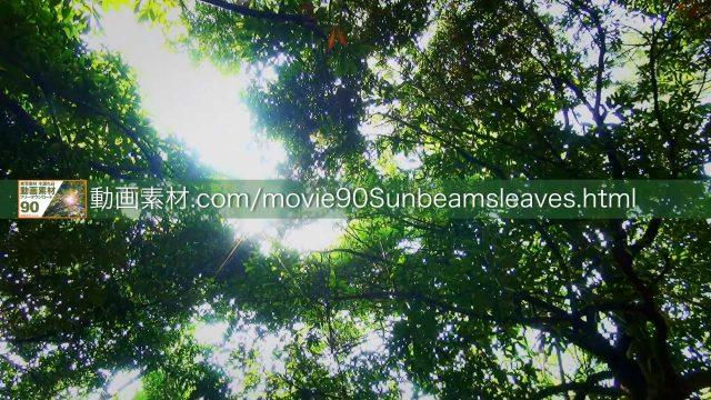 sunbeamsleaves07