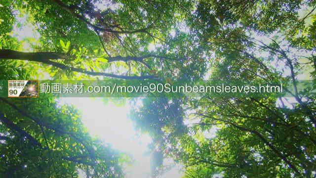 sunbeamsleaves08