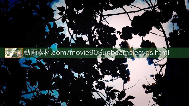 sunbeamsleaves09