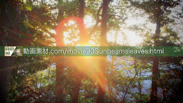 sunbeamsleaves10