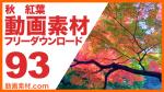 実写素材 紅葉 秋【フリー動画素材10本追加】