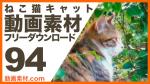 実写素材 ねこ猫キャット【フリー動画素材10本追加】
