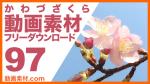 実写素材 河津桜【フリー動画素材10本追加】