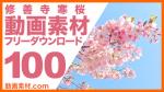 実写素材 修善寺寒桜【フリー動画素材10本追加】