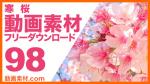 実写素材 寒桜【フリー動画素材10本追加】