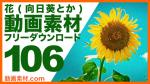 花(向日葵など)動画素材【フリー動画素材10本追加】