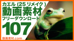 カエル実写 動画素材【フリー動画素材10本追加】