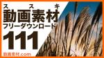 実写素材 ススキ 動画素材【フリー動画素材10本追加】